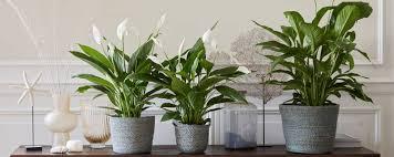 vorteile luftreinigenden pflanzen bakker