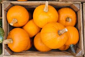 Pumpkin Patch Reno by Pumpkin Patches In The San Francisco Bay Area