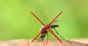 mückenfrei ohne chemie die 11 effektivsten methoden zur