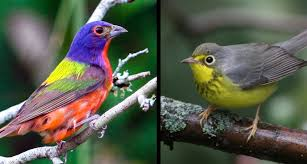 Windows May Kill Up To 988 Million Birds A Year In The United States