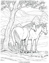 Arabian Horse Coloring Pages Mares And Foals Breeds Realistic