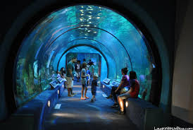 Moody Gardens Aquarium and more Laugh With Us Blog