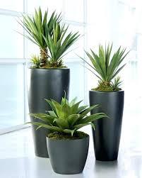 Low Light Indoor Plants Snake Plant Indoor Plants Low Light Indoor