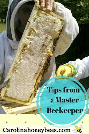820 Best Bees! Images On Pinterest | Bee Keeping, Honey Bees And ... Welcome To The Hive Beverly Bees Beginners Guide Keeping Bee Keeping And Bkeeping Backyard Beehive Image With Capvating How Keep Out Of Like A Girl 10 Mistakes New Bkeepers Make References The Honey Bee Honey Everything You Need To Know About Producing Your Best Images Picture Raise In How Much Room Should I Give My Bees Bees In Backyardbees Huney Back Yard Bulgari 6 Awesome Designs Inhabitat Green Design For Step By