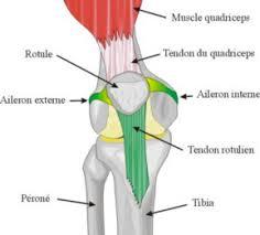 douleur interieur genou course a pied si vous pressez ces 2 points à l arrière de vos genoux quelque