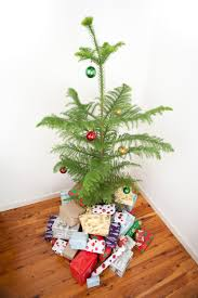 Kinds Of Christmas Tree Decorations by Norfolk Pine Christmas Tree Christmas Lights Decoration