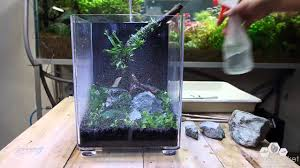 Nano Aquarium Dymax IQ5 Planted - Aquascape Setup - YouTube How To Set Up An African Cichlid Tank Step By Guide Youtube Aquascaping The Art Of The Planted Aquarium 2013 Nano Pt1 Best 25 Ideas On Pinterest Httpwwwrebellcomimagesaquascaping 430 Best Freshwater Aqua Scape Images Aquascape Equipment Setup Ideas Cool Up 17 About Fish Process 4ft Cave Ridgeline Aquascape A Planted Tank Hidden Forest New Directly After Setting When Dreams Come True