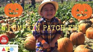 Faulkner Pumpkin Patch by Buggys Fun Trip At The Pumpkin Patch Youtube