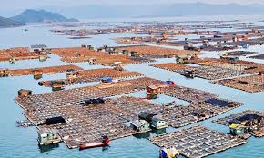 100 Boat Homes Chinas Tanka Boat Peoples Floating Homes Daily Mail Online