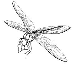 Dragonfly Coloring Page Free Pages