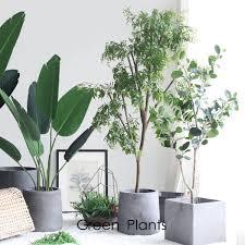 Romaine Lettuce Plant Pods Click Grow