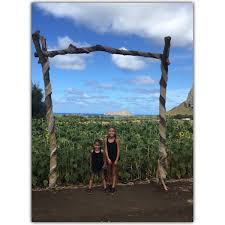 Waimanalo Pumpkin Patch Oahu by Waimanalocountryfarms Twitter Search