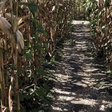 Pumpkin Patch Chesapeake Va by Hickory Ridge Farm 26 Photos U0026 11 Reviews Farmers Market