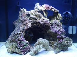 Vidofner's Man-cave-reef | REEF2REEF Saltwater And Reef Aquarium Forum Aquascape Designs Surripuinet Aquascaping Live Rocks In Your Saltwater Aquarium Columns A Saltwater Tank Callorecom Need Ideas General Rfkeeping Discussion Week 3 Aquascaping 120 Gal Rimless Update Youtube 55g Vertical Tank Ideas Saltwaterfish Forum Aquascape With Rocks Google Search Aquariums Pinterest Bring Back The Wall Rock News Reef Builders Walls For Building Tiger Fish Aquascapinglive Rock Help Tcmas Forums