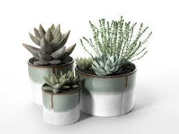 Fake Plants For The Bathroom by Bathroom Design Magnificent Plants Good For The Bathroom