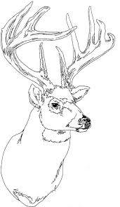 Deer Coloring Pages Head