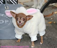 Tompkins Square Park Halloween Dog Parade Winner by My Picks Of The Best Halloween Pet Costumes This Year Bark And