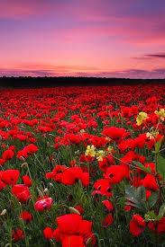 16 best Flower Landscape images on Pinterest