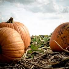 North Lawrence Pumpkin Patch by Farms For Every Season Unmistakably Lawrence