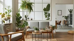 jungle pflegeleichte pflanzen tipps und inspiration