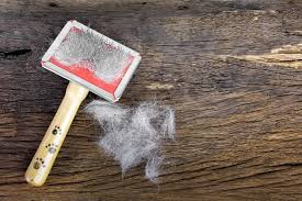 Shedding Blade Vs Rake by 7 Best Methods For Deshedding A Dog With A Step By Step Checklist