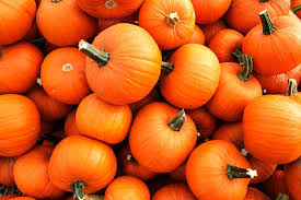 Pumpkin Patch Marble Falls by Texas Big Worm Farm Opens Its Pumpkin Patch
