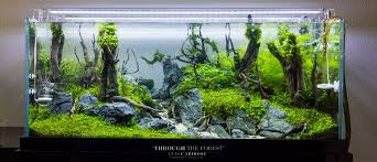 AQUASCAPE IDEA 6 - Meowlogy Aquascape Of The Month June 2015 Himalayan Forest Aquascaping Interesting Driftwood Placement Aquascapes Pinterest About The Greener Side Aquascaping Design Checklist Planted Tank Forum Simons Blog Decoration Bring Nature Inside Home Ideas Downhill By Arie Raditya Aquarium 258232 Aquaria Creating With Earth Water Fire Air Space New Aquascapemarch 13 2016page 14 Page 8 Aquapetzcom Magical Youtube 386 Best Tank Images On Aquascape