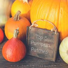 Pumpkin Patch Pasadena Area by Top 5 Pumpkin Patches In And Around Los Angeles