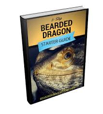 the ultimate bearded dragon care sheet bearded dragon tank