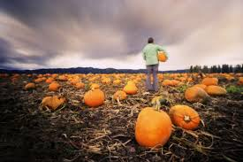 Best Pumpkin Farms In Maryland best pumpkin patches in america jetset