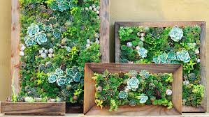 Framed Succulent Wall Art Make Your Own Living Inside Ideas