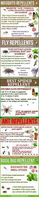 25+ Unique Mosquito Spray For Yard Ideas On Pinterest | Natural ... How To Keep Mosquitoes Away Geting Rid Of Five Tips For Getting Bugs And Pests On Your Patio Youtube To Get Chiggers Skin Body Yard Symptoms Fast Crawly Catures In My Backyard Alberta Home Gardening 25 Unique Rid Spiders Ideas Pinterest Kill Off Bug Control I Repellent Spiders Spider Spray Sprays Cutter 16 Oz Outdoor Foggerhg957044 The Of Time Tested Bob Vila Pictures With Japanese Beetles Garden Best Indoor Mosquito Killers Insect Cop