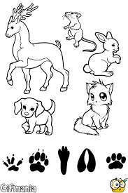Match Animals And Footprints