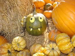 Pumpkin Patch Fort Collins by The Bartels Pumpkin Patch Home Facebook