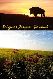 Prairie Pines Pumpkin Patch Wichita Ks by 17 Best History U0026 Fun Facts Images On Pinterest Fun Facts
