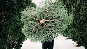 tannenbaum kaufen kann ich mir guten gewissens noch einen