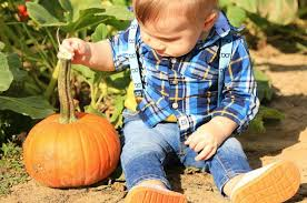 Pumpkin Picking In Chester Nj by Best Nj Pumpkin Patches Hayrides Corn Mazes For 2017