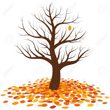 Leafless tree in autumn with one last single orange leaf on it waiting for to fall