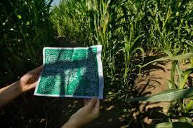 Pumpkin Patch Dixon Ca dixon u0027s landmark corn maze the world u0027s largest u2013 again the