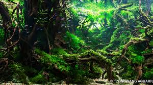Previous Years' Contest | 2017 IIAC Aquascaping Contest Hamsa Wabikusa Style Aquascaping World Forum Httpwww Nature Aquarium And Aquascaping Wiki 25l Nano Capa 2011 French Aquascapers Results My Scape Iaplc Rank 70 The Passing Of Legend Takashi Amano Magazine With Nicolas Guillermin Surreal Submarine Amuse Aquascape The Month August 2010 Beyond Riccardia Chamedryfolia Question This Is Ada 2009 Susanna Aquascape Garden Bonsai Plants