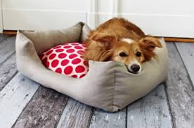 hundebett beige grau punkte rot hund katze