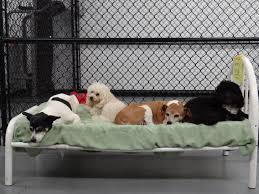 Bed And Biscuit Greensboro Nc by Dog Gone Fun Daycare Training And Boarding 203 Berry Garden