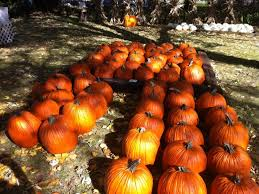 Pumpkin Farms In Channahon Illinois by Pumpkin Farm Has Been In The Family For 50 Years Joliet Il Patch