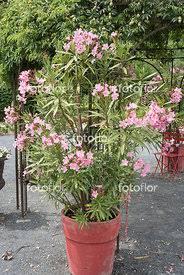 fotoflor toutes les photos et images de plantes fleurs jardins