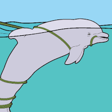 Winter The Dolphin In Crab Trap Coloring Page