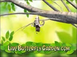 Live Butterfly Garden mercial