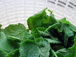 comment cuisiner les fanes de radis cuisiner les feuilles des légumes
