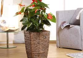 übertöpfe für zimmerpflanzen in der übersicht obi