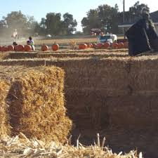 Best Pumpkin Patch Near Roseville Ca by Uncle Ray U0027s Pumpkin Patch 160 Photos U0026 57 Reviews Pumpkin