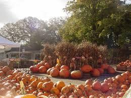 Local Pumpkin Farms In Nj by Wightman U0027s Farms Morristown Nj